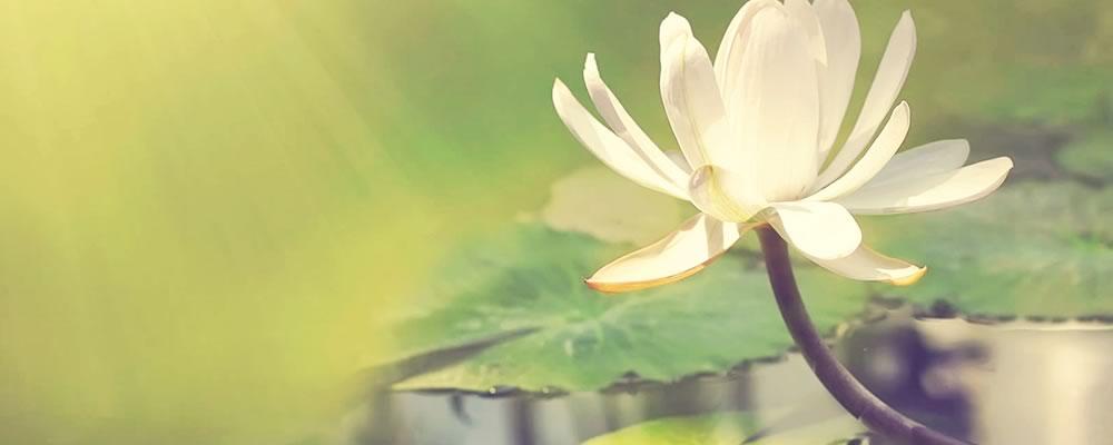 癒しのパワーで心にゆとりを与えてくれる